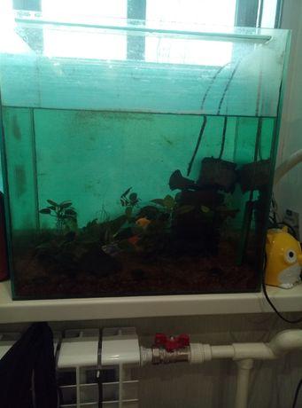 Рыбки для аквариума 1Боция + 3 Тернеции