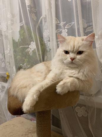 Вязка котов. Приглашает на свидание
