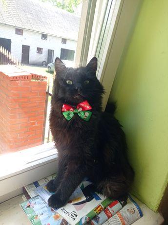 Zaginął czarny, niewychodzący kot Skaszyn,