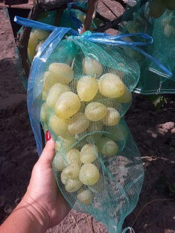 Мешочки для винограда.