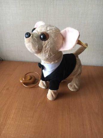 Собака Чи Хуа Хуа на пульте музыкальная (ходит, лает, поет)