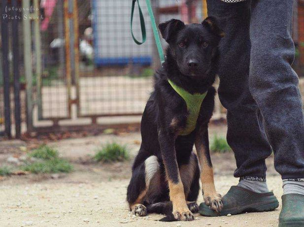 Fajny, energiczny pies do adopcji