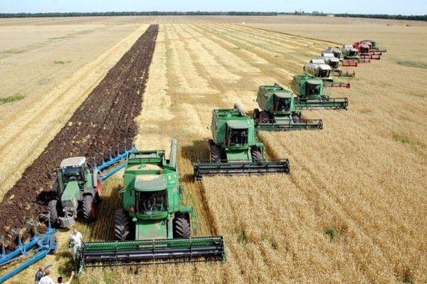 Семена сои,подсолнечника,рапса,пшеницы,ячменя,гороха,кукурузыКАНАДА
