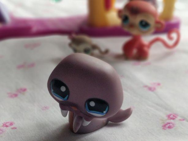 Littlest Pet Shop - LPS - Hasbro -  Fioletowa foka foczka