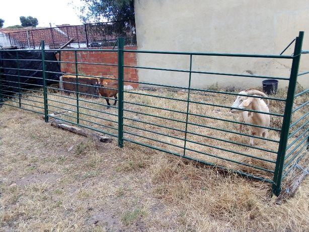 Cancelas para ovelhas ou cabras