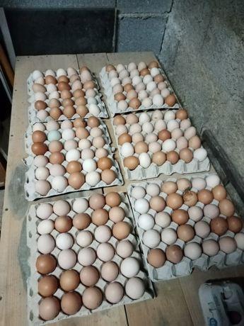 Vendo ovos caseiros e Jersey jigante negro
