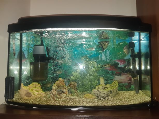 Akwarium 60L z akcesoriami i rybkami