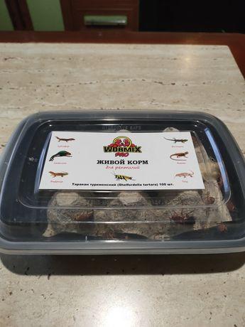 Живой корм ( туркменские тараканы)