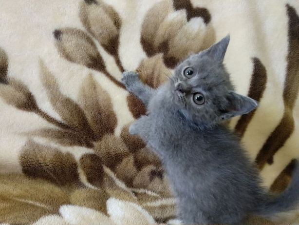 Заммурчательные котики !