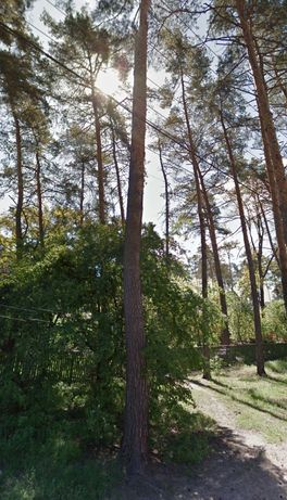 Участок 49 соток в Лесной Буче