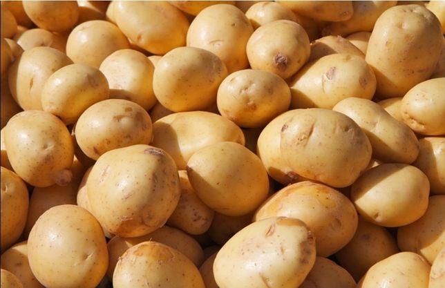 Картошка большая и семенная