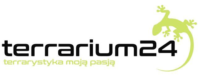 Chromatopelma cyaneopubescens samica, Irminia Metallica  Terrarium24