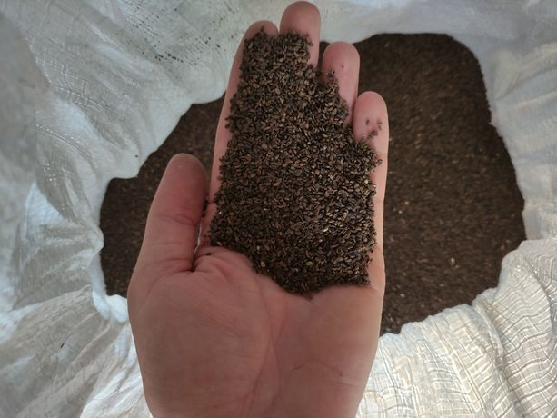 Facelia błękitna nasiona faceli fitosanitarna miododajna zazielenienia