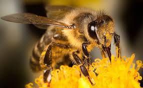 Пчелы Бджоли Бджолопакети
