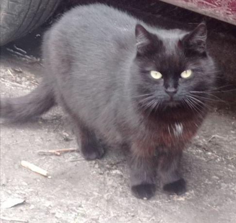 Стерилизованнная кошечка Симочка 4,5 года срочно ищет дом!!!