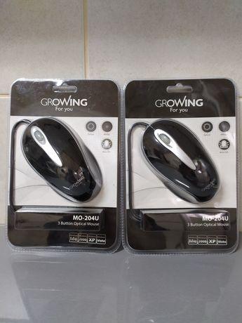 2 ratos Growing novos