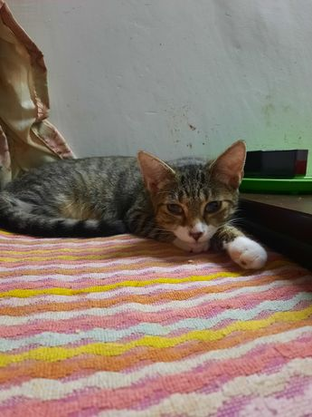 Koty w TOZ w Elblągu do adopcji
