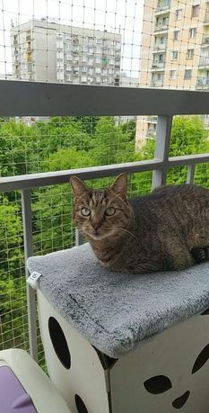Henryk Henio przepiękny kot który stracił ukochaną Panią szuka domu
