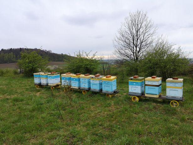 Odkłady pszczele z ulami
