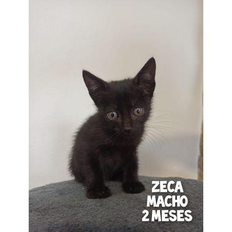 Zeca- gatinho bebe para adoção