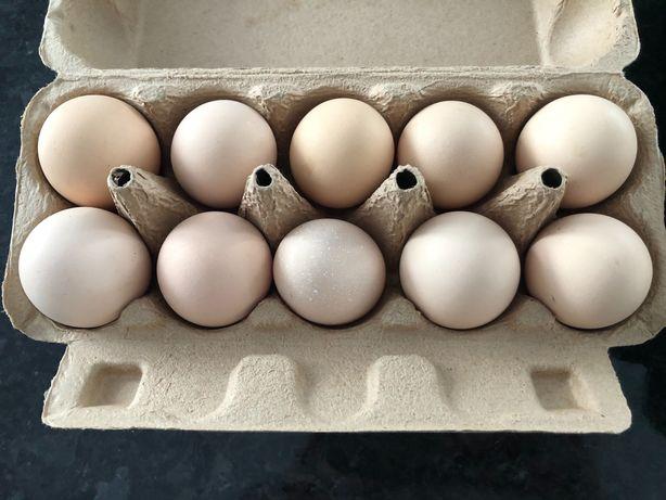 Jajka z wolnego wybiegu 0,60 gr sztuka