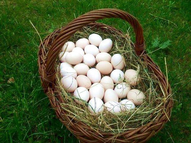 Swojskie wiejskie jaja. Eko jajka od kur z wolnego wybiegu na wsi.