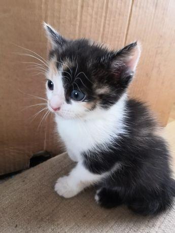Кіт, кицька в добрі руки, кошеня, кот, кошка