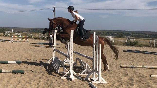 лошадь, кобыла, конь выездка/конкур