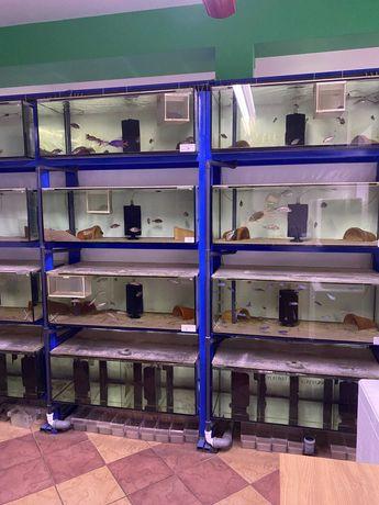 Akwarium akwaria gotowy zestaw do hodowli - sprzedam