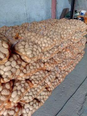 Ziemniaki Vineta, Tajfun, Lord