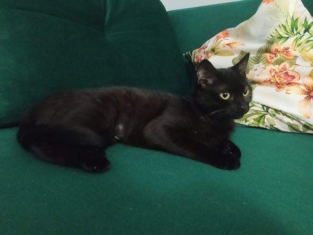 Pilnie porzucona niechciana 8 miesieczna koteczka szuka domku na cito