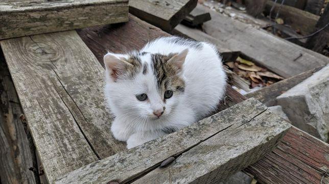 Кошенята віддам Котеня котенок отдам