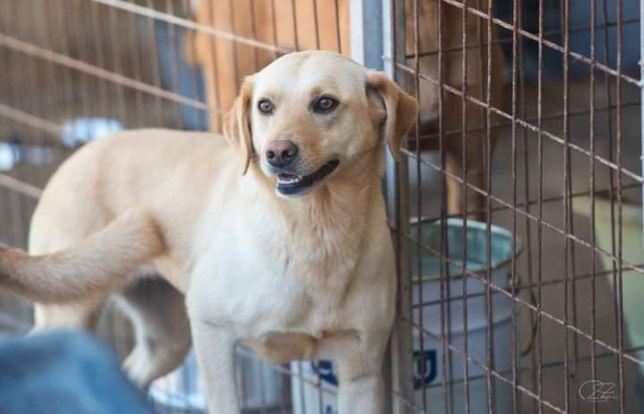 Palhacinha- cachorra de porte médio para adoção