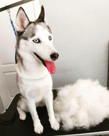 Стрижка собак Одесса, груминг Одесса