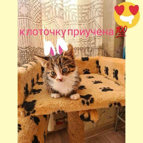 Милая девочка котенок ищет дом