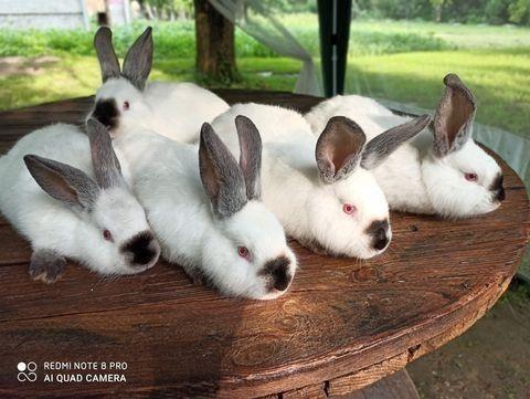 Кролі різних порід,та возрасту.