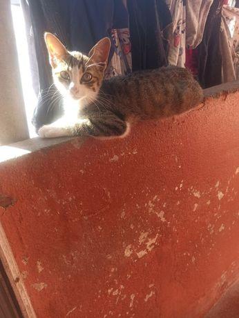 Gato..........,..