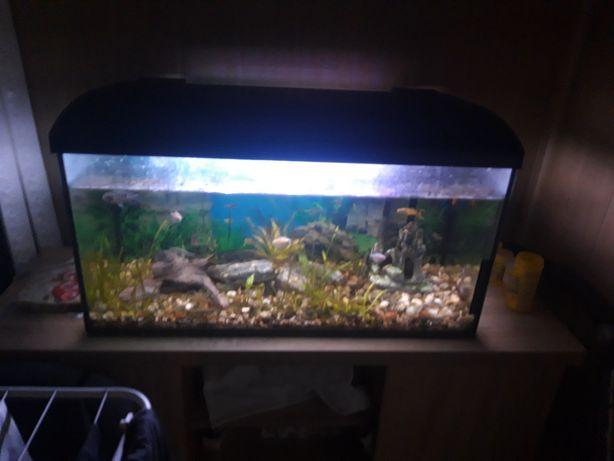 Zamienię akwarium