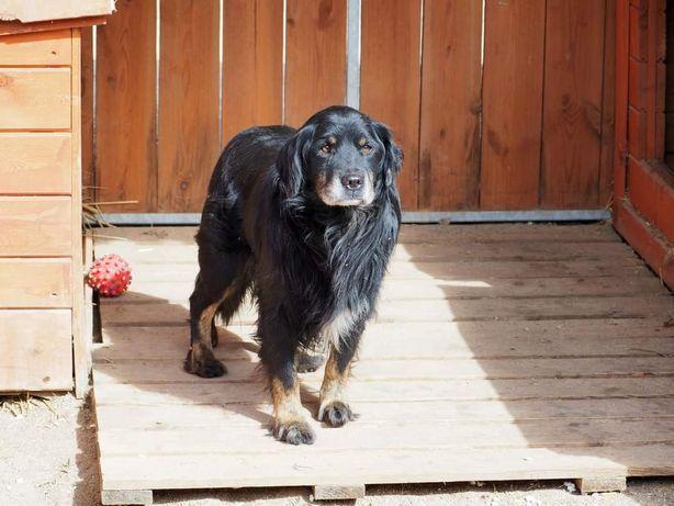 MELON grzeczny łagodny psiak szuka PILNIE cierpliwego dobrego domku