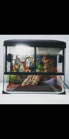 Terrarium tropikalne z wodospadem