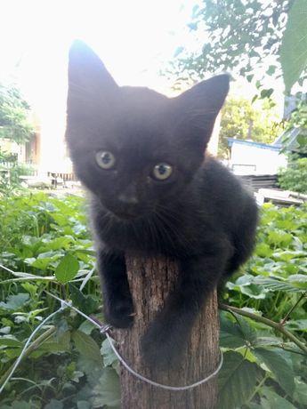 Отдам котика в хорошие руки
