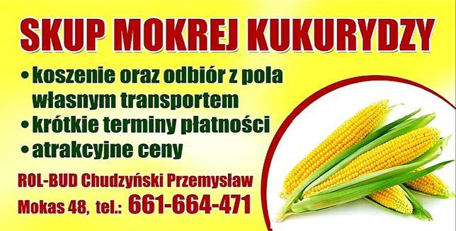 Skup mokrej kukurydzy !!! Koszenie !!! Transport !!!