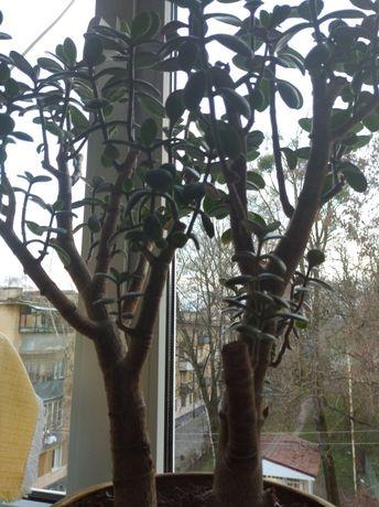 Продам дерево щастя