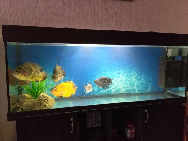 Срочно продаю аквариум на 320 литров