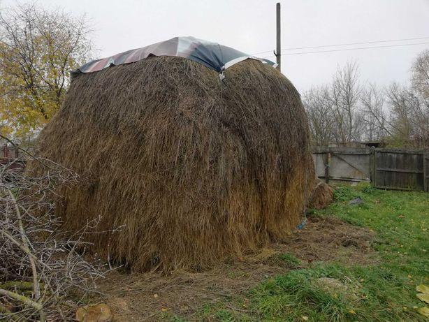 сено сіно солома для коровы