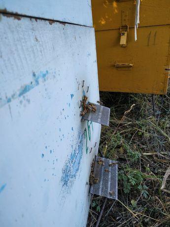 Продам бджоли з вуликом і без
