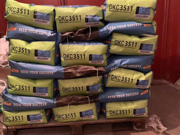 Насіння кукурудзи Монсанто ДКС 3511 ФАО 330 Семена кукурудзи