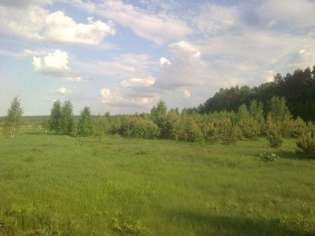 Аренда, 19 га поливных земель