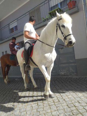 Cavalo meigo e montado