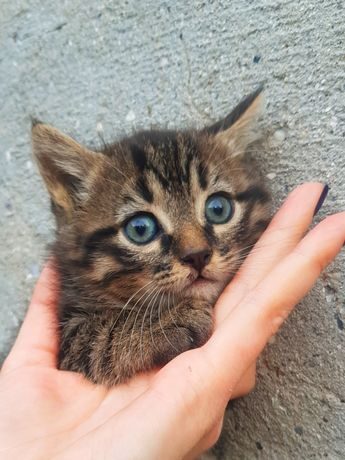 Красивый котёнок девочка в хорошие руки